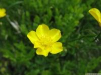 kwiat_473