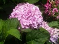 kwiat_481