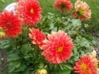 kwiat_484