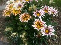 kwiat_485
