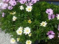 kwiat_486