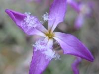 kwiat_487