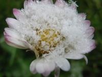 kwiat_489