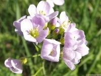 kwiat_490