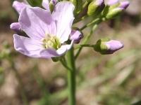 kwiat_491