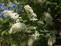kwiat_492