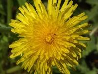 kwiat_494