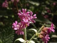 kwiat_495