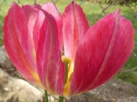 kwiat_502