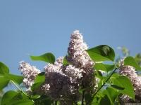 kwiat_505