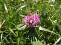 kwiat_507