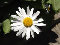 kwiat_513