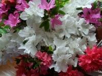 kwiat_514