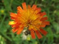 kwiat_523