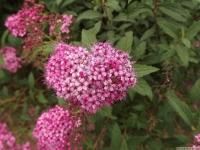 kwiat_527
