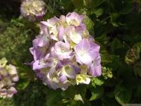 kwiat_532