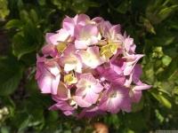 kwiat_533
