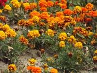 kwiat_537