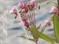 kwiat_539