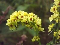 kwiat_547