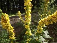 kwiat_548
