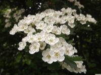 kwiat_920