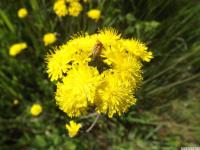 kwiat_924