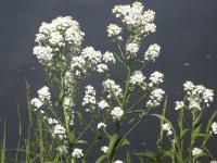 kwiat_926