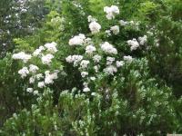 kwiat_927