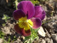 kwiat_931