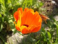kwiat_935