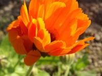 kwiat_936