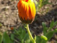kwiat_937