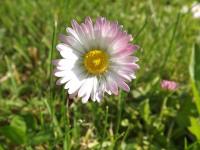 kwiat_938