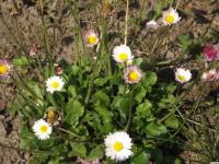 kwiat_939