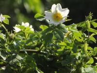 kwiat_940