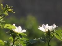 kwiat_941
