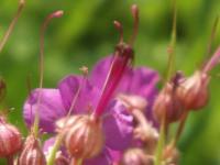 kwiat_943