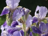 kwiat_946