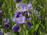 kwiat_947