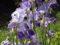 kwiat_948