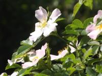 kwiat_953