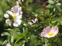 kwiat_954