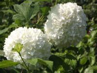 kwiat_956