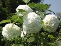 kwiat_957