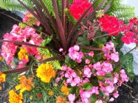 kwiat_959