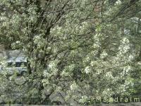 drzewokrzew_001