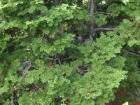 drzewokrzew_023