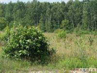 drzewokrzew_035