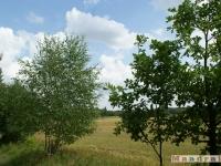 drzewokrzew_039